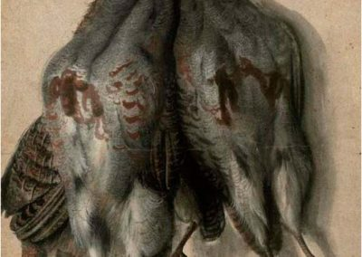 Lucas Cranach El Viejo 052