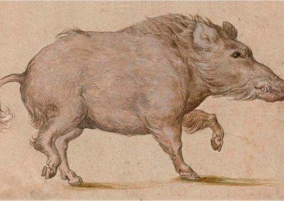 Lucas Cranach El Viejo 075