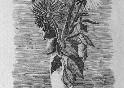 Giorgio Morandi 078